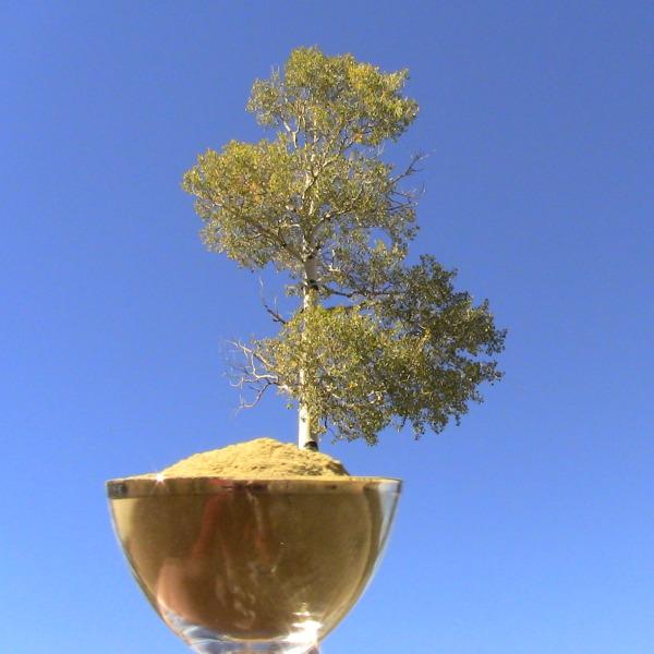 Kratom aspen hybrid IMG_0564